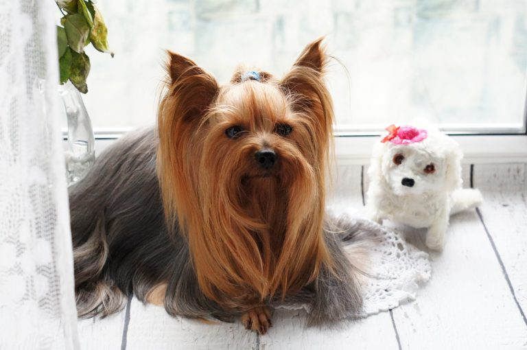 The Essential Tools of Dog Grooming