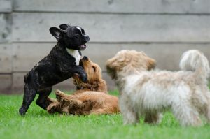 Why Is Dog Daycare A Good Idea For Your Pet?