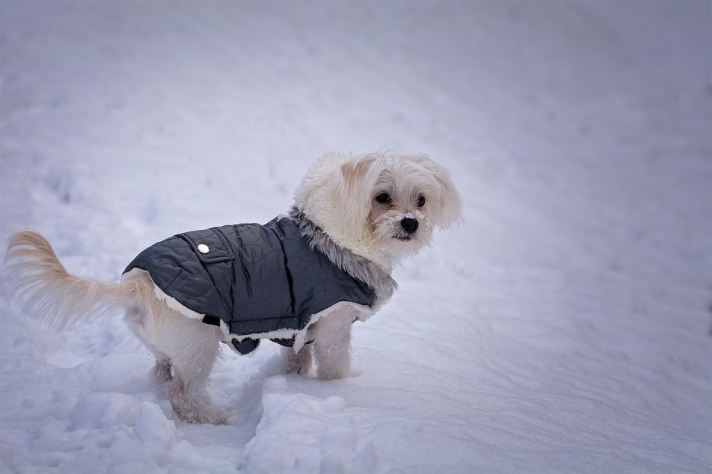 Small Dog Clothes  - small dog clothes 1024x682 - Home